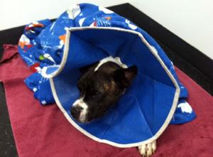 Jethro – Helped November 2014