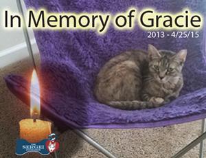 Gracie – Helped April 2015