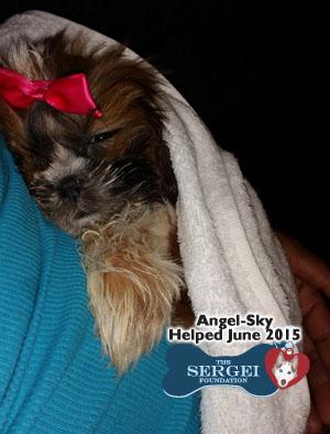 Angel-Sky – Helped June 2015