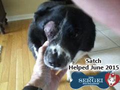 Satch – Helped June 2015
