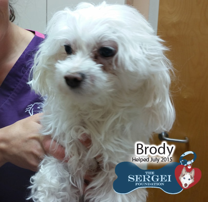 Brody – Helped July 2015