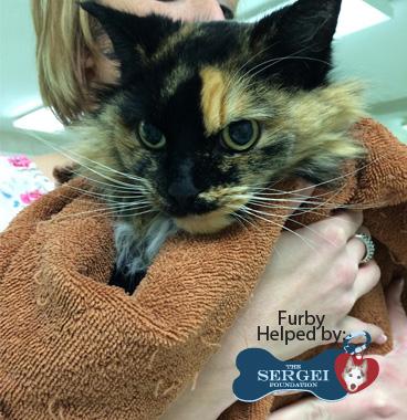 Furby – Helped July 2015