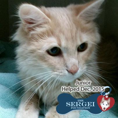 Junior – Helped Dec. 2015