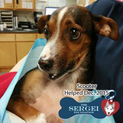 Scooter – Helped Dec. 2015