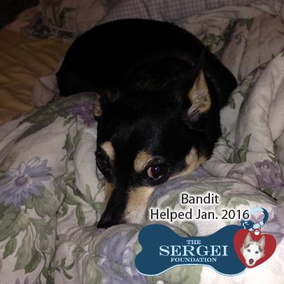 Bandit – Helped Jan. 2016
