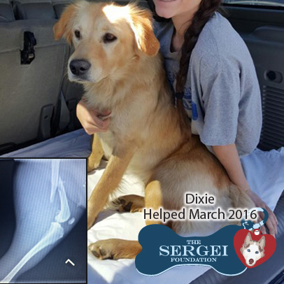 Dixie – Helped March 2016