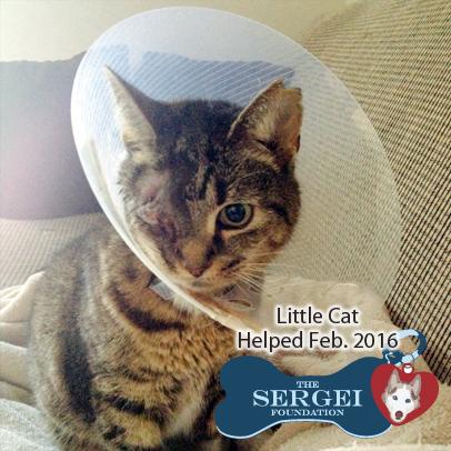 Little Cat – Helped Feb. 2016