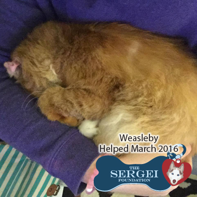Weasleby – Helped March 2016