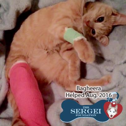 Bagheera – Helped August 2016