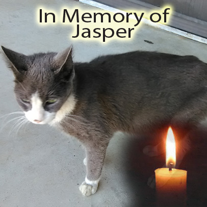 Jasper – Helped August 2016