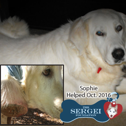 Sophie – Helped Oct. 2016
