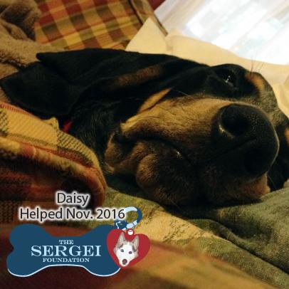Daisy – Helped Nov. 2016