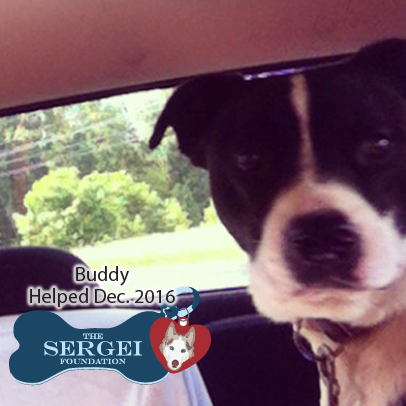 Buddy – Helped Dec. 2016