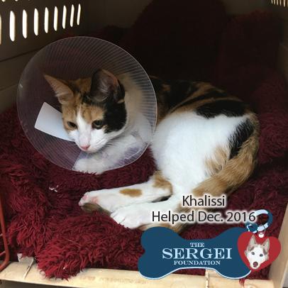 Khalissi – Helped Dec. 2016