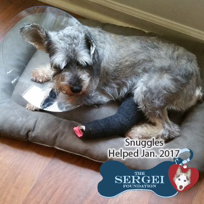 Snuggles – Helped Jan. 2017