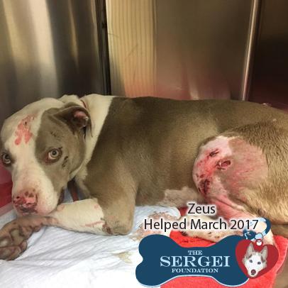 Zeus – Helped March 2017