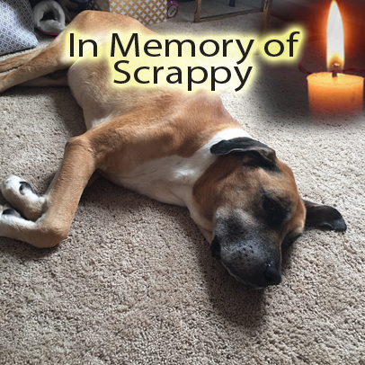 Scrappy – Helped April 2017
