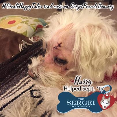 Harry – Helped Sept. 2017
