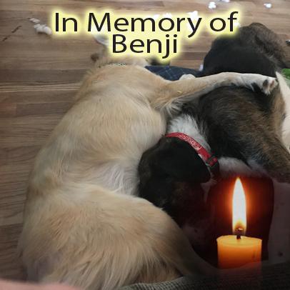 Benji – Helped Oct. 2017