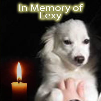 Lexy – Helped Oct. 2017