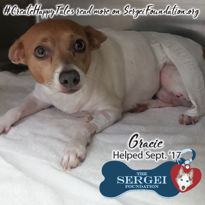 Gracie – Helped Sept. 2017