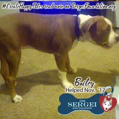 Bailey – Helped Nov. 2017