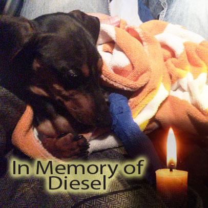 Diesel – Helped Dec. 2017