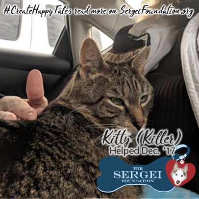 Kitty – Helped Dec. 2017