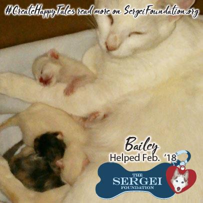 Bailey – Helped Feb. 2018