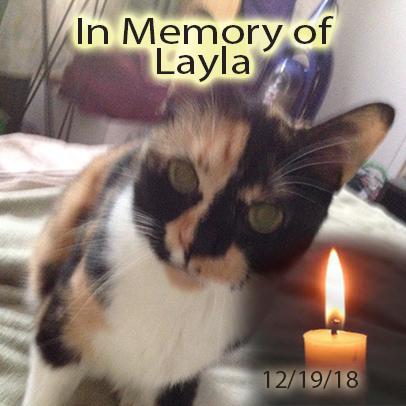 Layla – Helped Dec. 2018