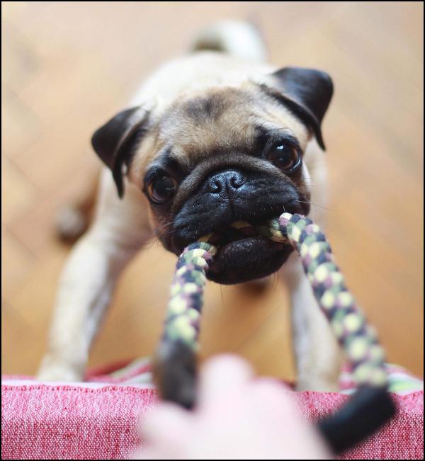 Pet Toy Pitfalls to Avoid…