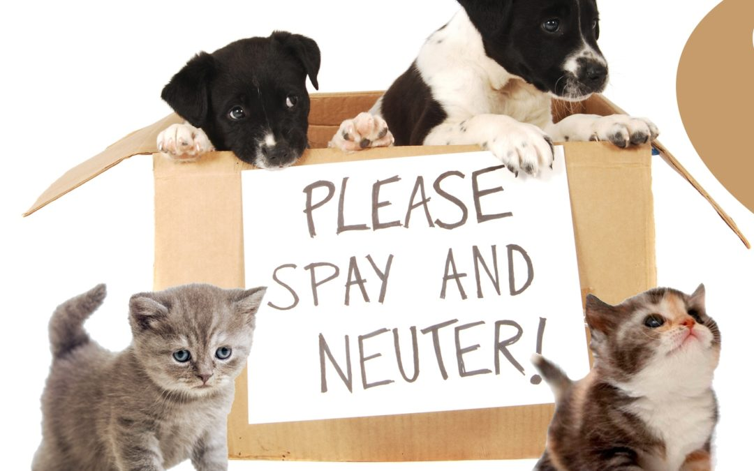 Importance of Spaying or Neutering Your Pet