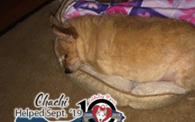 Chachi – Helped Sept. 2019