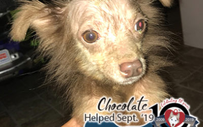 Chocolate – Helped Sept. 2019