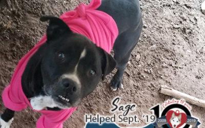Sage – Helped Sept. 2019