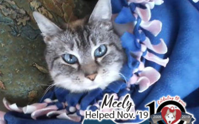 Meely – Helped Nov. 2019