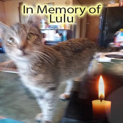 Lulu – Helped Dec. 2019